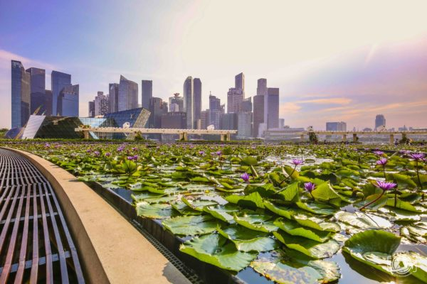 Dintorni di Marina Bay Sands. Cose da vedere a Singapore