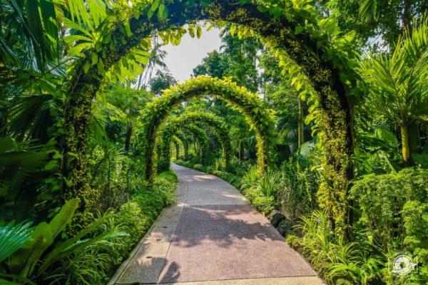 Viaggiare da soli a Singapore, da non perdere il Botanic Garden