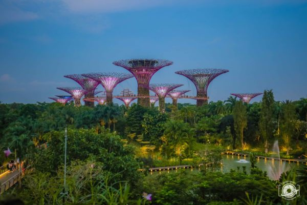 I Supertree groves a Gardens by the Bay a Singapore. Da vedere in viaggio da soli